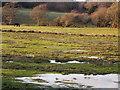 SY8787 : Meadow, Stokeford by Maigheach-gheal