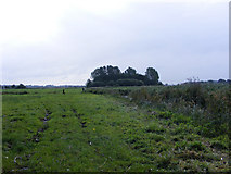 TG3504 : Langley Marshes by Glen Denny