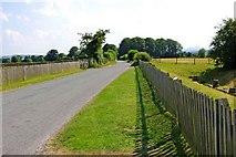 SJ5608 : Wroxeter Roman City (05) - public road through the site by P L Chadwick