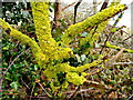 TF0411 : Rutland lichen by Jonathan Billinger