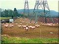 SO6522 : Pink sheep by Jonathan Billinger