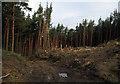 NZ6007 : Tree felling in Battersby Plantation by Trevor Littlewood
