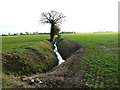 TM0886 : Trees growing beside a ditch in field south of Winfarthing Road by Evelyn Simak