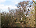 TL5553 : Wooded part of Fleam Dyke by John Sutton