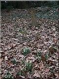 TQ0241 : Grave in Grafham churchyard by Shazz
