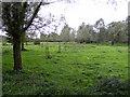 TM3389 : Marsh plantation adjacent to Earsham Dam by Glen Denny