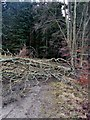 NT4529 : Storm blown tree over the Corby Linn Track by Iain Lees
