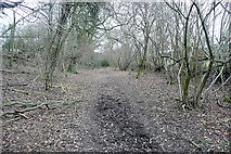 SP9902 : Bridleway from Ley Hill by Graham Horn