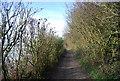 TQ8952 : Pilgrims' Way by N Chadwick