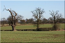 TL8063 : Former parkland, Little Saxham by Bob Jones