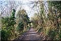 TQ8753 : Pilgrims' Way by N Chadwick