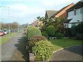SP1081 : Fox Hollies Road by araucaria araucana