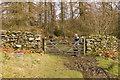 SD3594 : Footpath entering Slack Wood by Tom Richardson