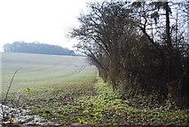 TQ8554 : Hedge off Pilgrims' Way by N Chadwick