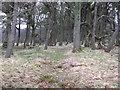 NS8455 : Stripwood, Morningside by Richard Webb