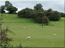 SO9969 : Pasture near Tardebigge, Worcestershire by Roger  Kidd