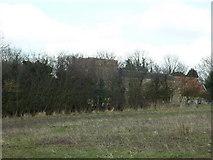 TA0609 : Hiding behind the tree's by Ian S