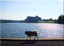 SN0403 : Carew Castle by Deborah Tilley