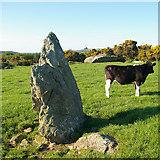 SM9527 : Standing Stone by Roger Gittins
