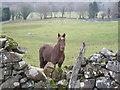 SH7519 : Friendly Horse by liz dawson