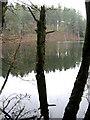 SJ5570 : Dead wood in Dead Lake by Jonathan Kington