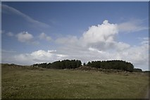 NR3055 : Edge of Conifer Plantation at Banaltrum Mhòr, Islay by Becky Williamson