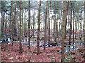 SJ5571 : Wet woodland by Jonathan Kington