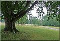 SU4266 : Parkland near Hamstead Marshall (4) by Stephen Richards