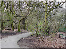SJ3682 : Eastham Country Park by David Dixon