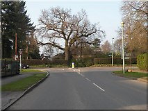 TL8364 : The junction where Flemyng Road meets Westley Road by Robert Edwards