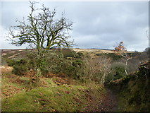 SS8229 : Footpath into Anstey's Gully by John Courtney