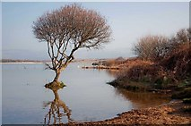 SS7981 : Kenfig National Nature Reserve by Mick Lobb