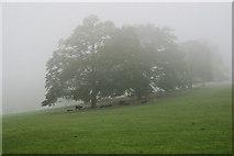 ST5071 : Broadleaf  trees in Tyntesfield Park by Stuart Logan