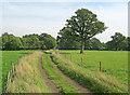 SP6838 : Track near Tilehouse Wood by Trevor Rickard