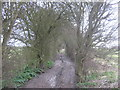 TR3144 : North Downs Way on a muddy byway to Dover Road by David Anstiss