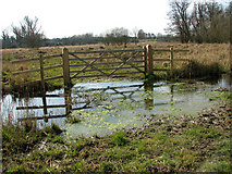 TG2105 : Flooded ditch in Marston Marsh (Norwich) by Evelyn Simak