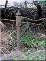 S7945 : Water Pump by kevin higgins