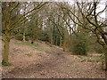 SJ7984 : Bollin Valley Walk by Ian Paterson