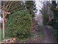 SU7446 : Footpath from the southern entrance to Lord Wandsworth College by Shazz