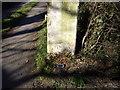 SJ5874 : Cut Mark: Gatepost, Station Road, Crowton by VBForever