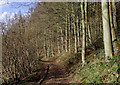 SJ7500 : Bridleway near Badger, Shropshire by Roger  Kidd