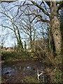 ST0204 : Flooded green lane, Mutterton by Derek Harper