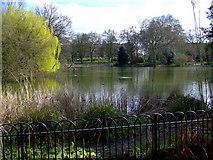 TQ2876 : Battersea Park by Thomas Nugent