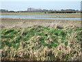 TF6526 : Flooded farmland between Wolferton and Castle Rising by Richard Humphrey