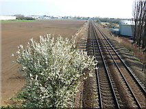 TL4097 : Railway tracks near Westry, March by Richard Humphrey