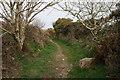 SW6535 : Bridle path near Cargenwen by Elizabeth Scott