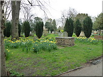 TQ2475 : All Saints, Fulham: spring in the churchyard  (a) by Basher Eyre