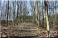 TL1267 : Woodland track by Simon Judd