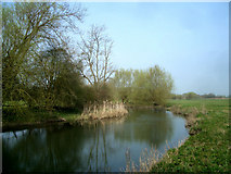 SU5894 : River Thame u/s of Warborough by Des Blenkinsopp