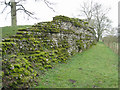 SU6462 : Moss coated Roman Wall by Given Up